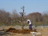 s-20100223 あぷりこ梅 009