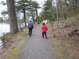 犬の散歩2