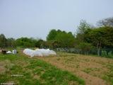 s-20100503〜04 あぷりこ菜園 023