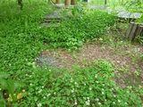 s-20100626〜27 ぽてーれ山荘 012