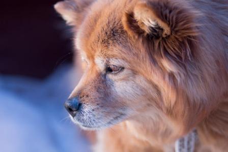 dog55-1