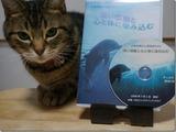 DVD「深い感動と心と体にしみこむ」