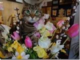 ぽわーる茶話会2016春のお知らせ