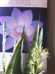 サンセベリアの花