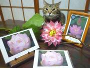 喜びの蓮花