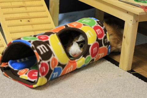 ハンドメイドのモルモット用家具ショップ「Piggiepopshop」