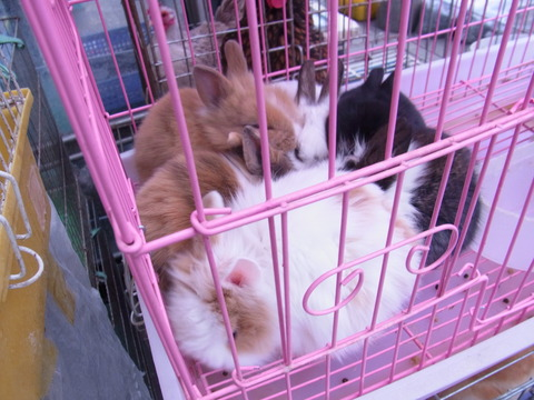 韓国で発見モルモット!ソウルの「ペットショップ通り」は小動物天国だった