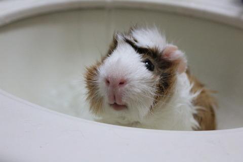 ラテを久しぶりにお風呂に入れました