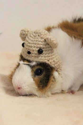 モルモットサイズのニット帽を編んでみた