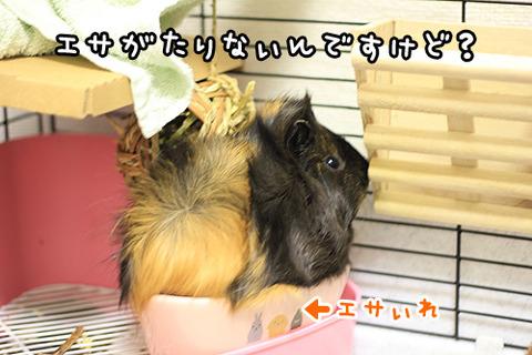 esa_hoshii_demo