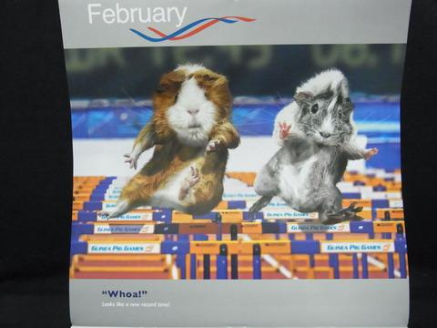これぞモルリンピック!英国発「Guinea Pig Games」カレンダー2013が届きました