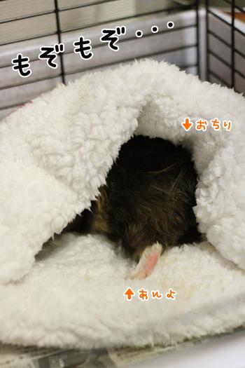 nebukuro_daisuki01