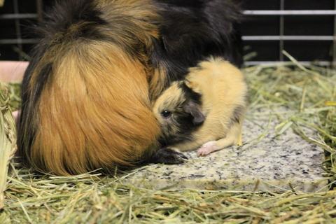 モカ、出産のご報告。3匹の赤ちゃんが産まれました!