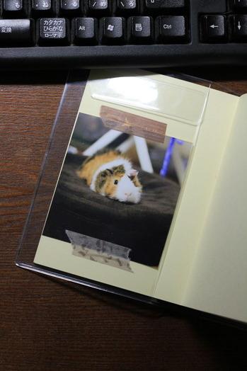 モルまみれの「ほぼ日手帳」