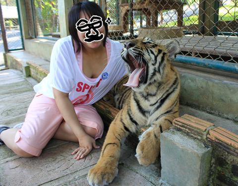 タイで発見モルモット!...とリスとゾウとトラと犬