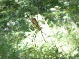 浅間山 蜘蛛