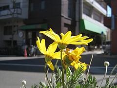 春ということばを使うことなくして今日ぼくが冷たい北風にあって感じた春をあらわす試みとしての・・・・・・
