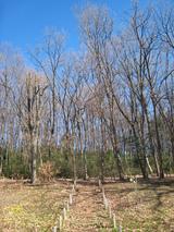 浅間山の雑木林