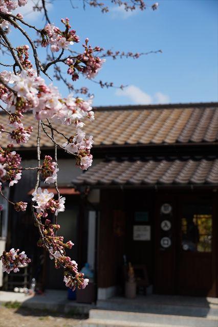 20160402_桜ツー (426)_R