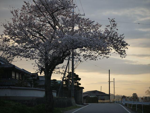 20140405_加西の桜 (3)_R