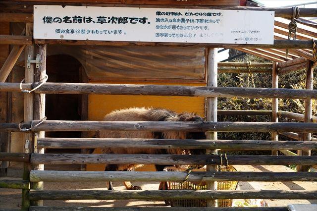 20160221_ぶらっと近場 (51)_R