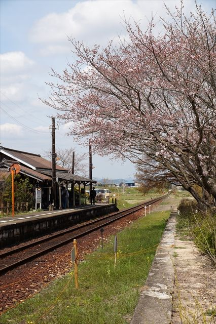 20160402_桜ツー (451)_R