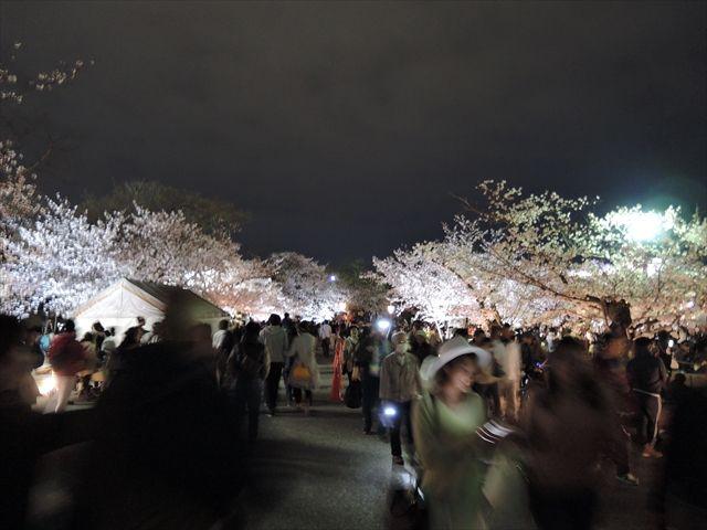20160402_夜桜とか (27)_R