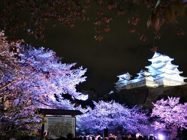 20160402_夜桜とか (99)_R