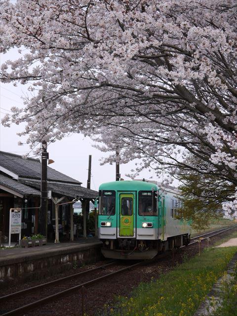 20140405_加西の桜 (51)_R