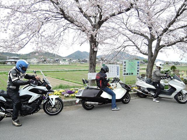 20160402_夜桜とか (148)_R