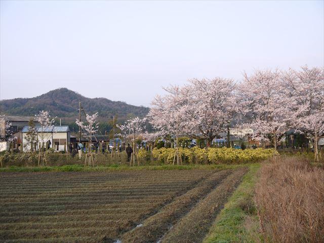 20140405_加西の桜 (24)_R