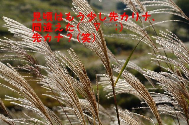 20150927_OSG生野ツー (127)_R