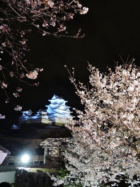 20160402_夜桜とか (95)_R