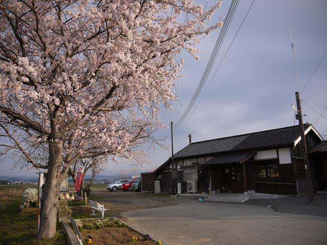 20140405_加西の桜 (30)_R