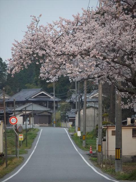 20140405_加西の桜 (4)_R