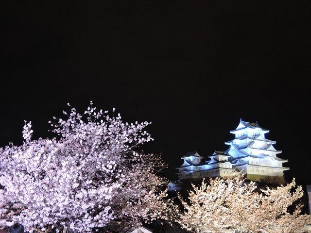 20160402_夜桜とか (51)_R