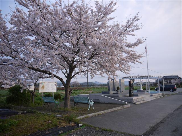 20140405_加西の桜 (8)_R