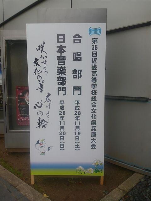 20161120_琴と競泳 (164)_R