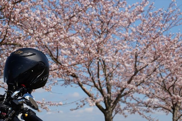 20160402_桜ツー (305)_R