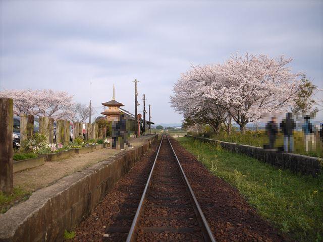 20140405_加西の桜 (34)_R