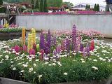 あしかがフラワーパーク・池と花