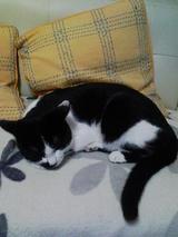 kotaro sleep