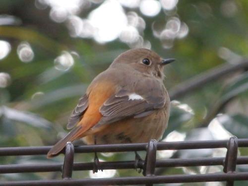 小鳥 (1)