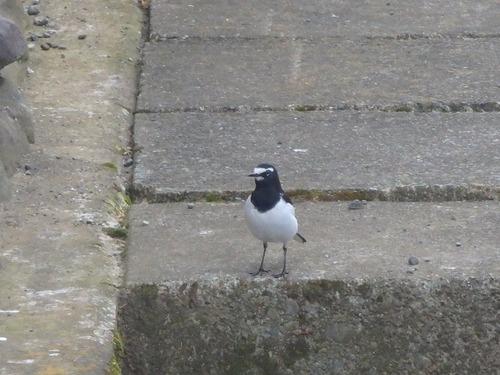 小鳥 (10)