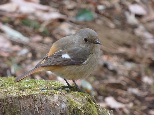 小鳥 (2)
