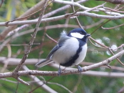 小鳥 (7)