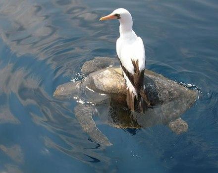 lazy seagull