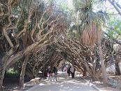 植物園木陰