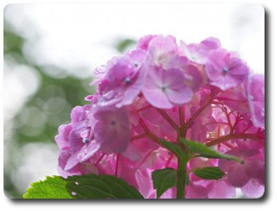 flower0116e