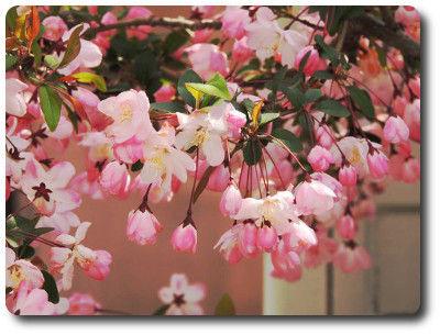 flower0415